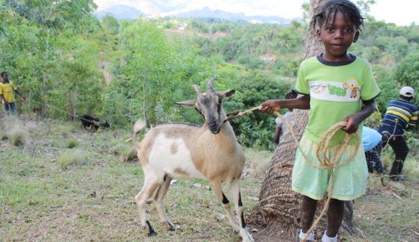 Lougou, Haiti 2013-03 (75)