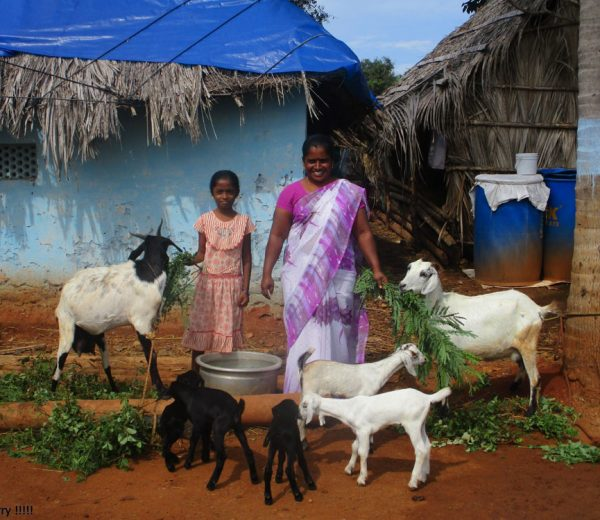 ora international - Projektland: Indien
