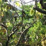 ora-Lebensbaum-Pate werden